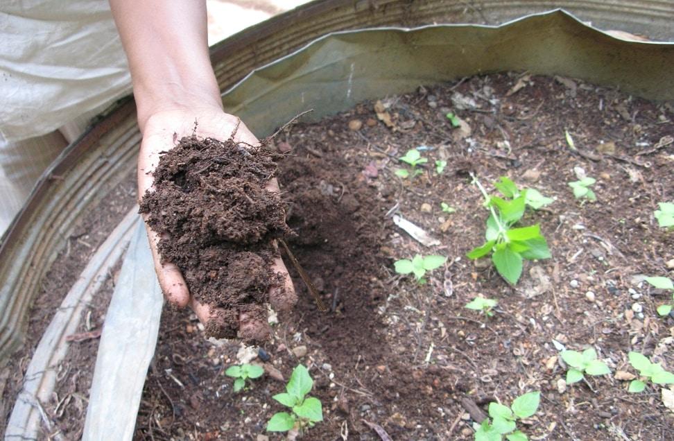 Le compost, un atout pour l'environnement et votre jardin