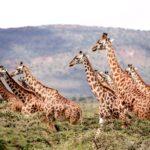 La Tanzanie, un pays parfait pour faire de la randonnée