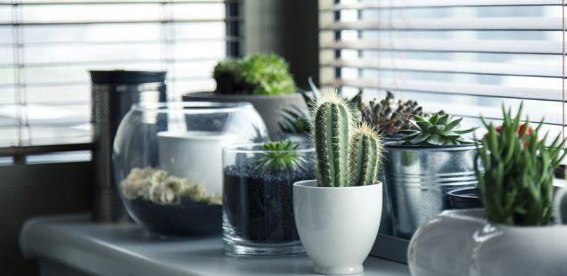 Le cactus : le nouveau cadeau original incontournable