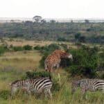 2 belles activités en groupe à prévoir pendant un séjour sur mesure au Kenya