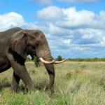 Un séjour en Afrique du Sud pour découvrir sa richesse naturelle