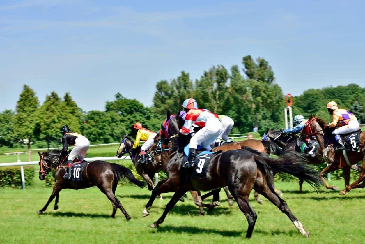 courses chevaux pronostics